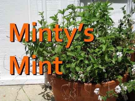 Minty's Mint mario Batali mint and pea