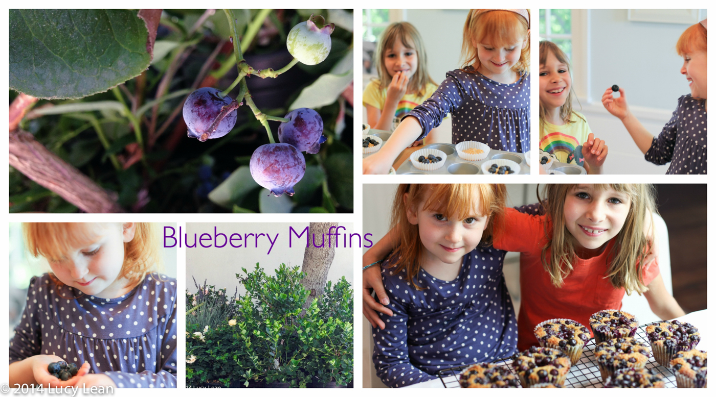 Elsie makes Blueberry Muffins from Made in America
