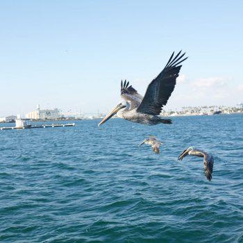 Fishing Trip Postponed – Due to Rough Seas